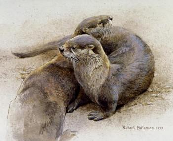 Bateman-OttersCavorting-op